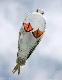 Чайка - вид снизу