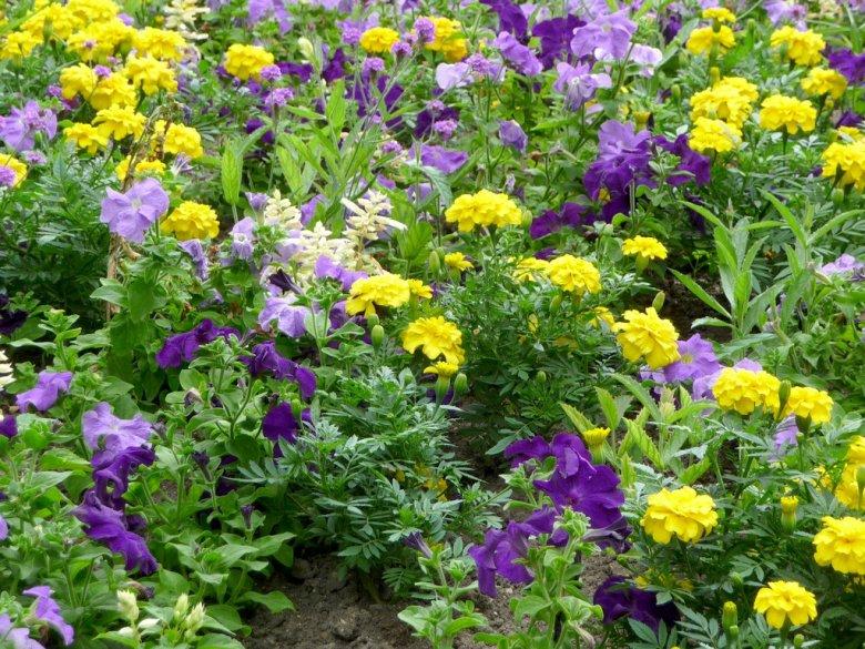 Выращивание однолетних и многолетних цветов 7136