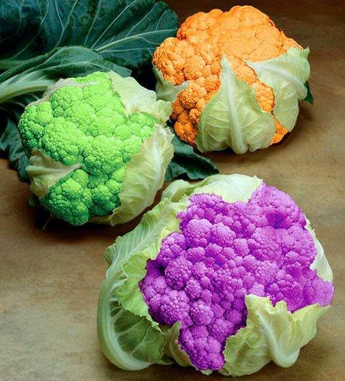 Переросшее соцветие цветной капусты