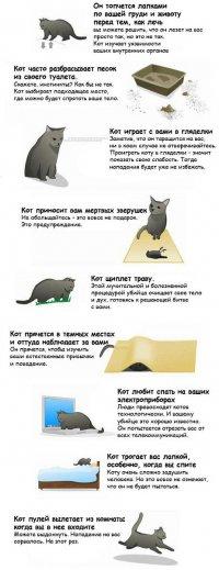 Девять признаков того, что ваш кот хочет вас убить