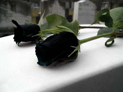 Язык цветов что значит черная роза