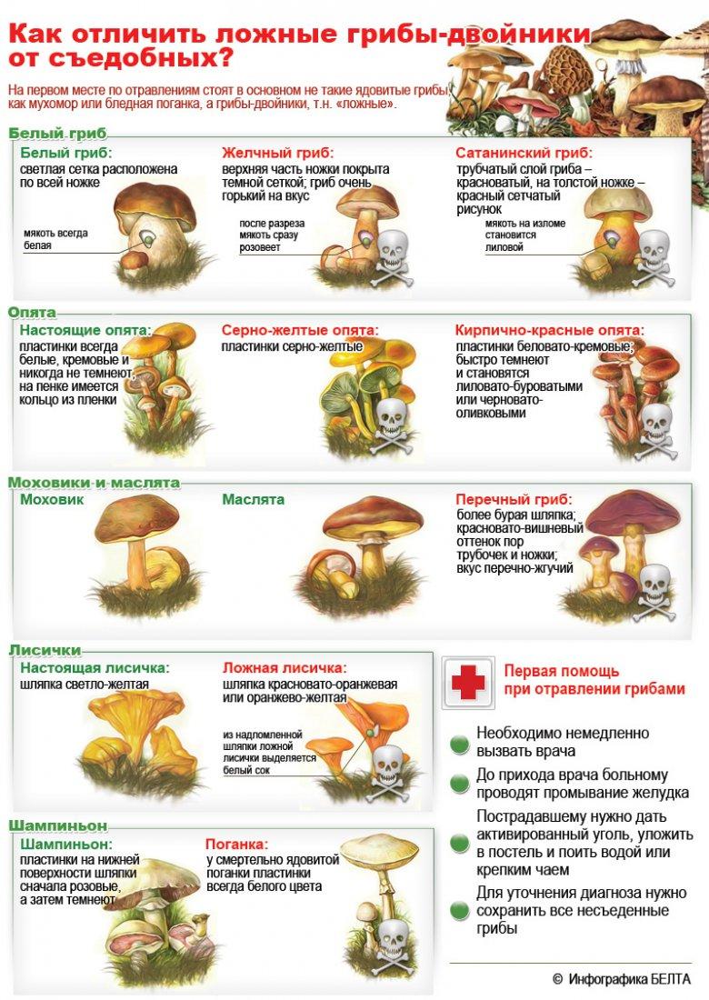 Как отличить ядовитые грибы от