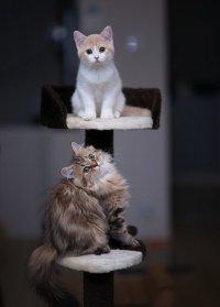 Котяшки-симпатяжки Ханна и Дейзи