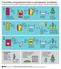 Как сохранить елку в домашних условиях?