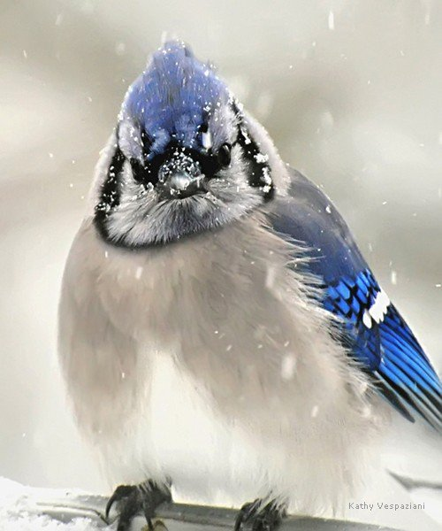 Сонник жаренная утка