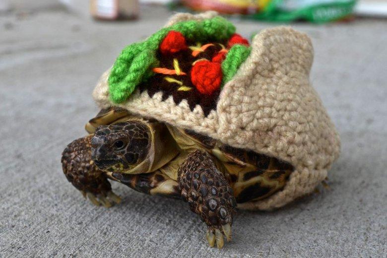 Вязаный костюмчик для черепашки