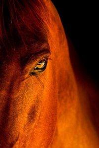 Рожденные в год Лошади 2014: характер и судьба