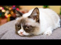 Реклама Friskies «Hard To Be a Cat at Christmas»