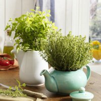 Ароматные травы, которые можно выращивать дома