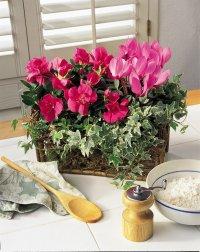 Какие цветы выбрать для кухни