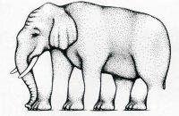 Невозможный слон Роджера Шепарда
