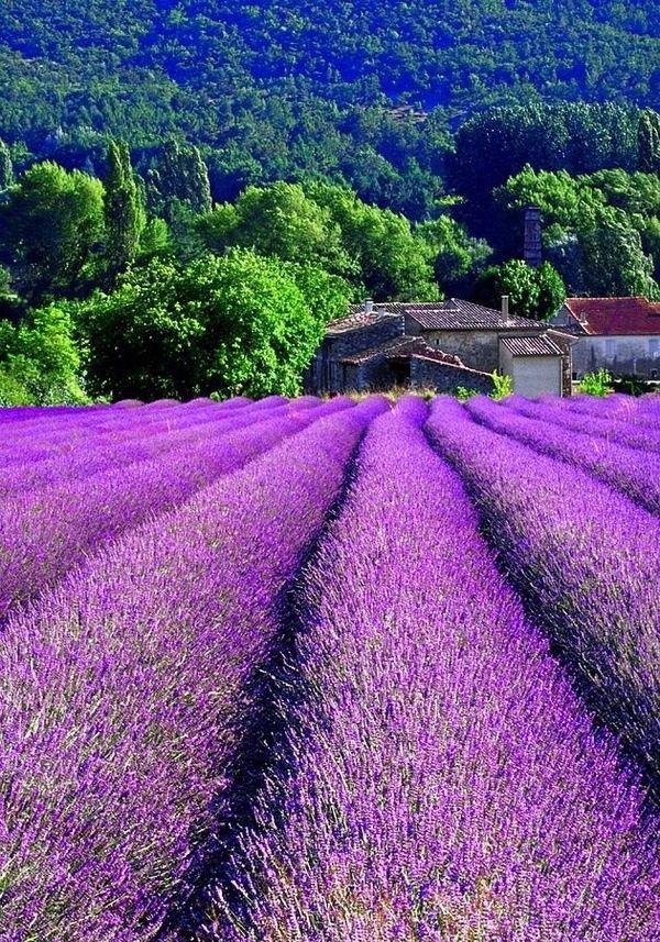 Прованс: Франция