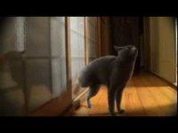 Умный кот стучится в дверь