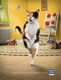 Смешная реклама: наполнитель для кошачьего лотка