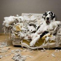 Выбор профессии: агент по защите домашних животных