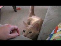 Самый настойчивый и самый вежливый кот в мире