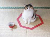 Интересное наблюдение: кота можно поймать в ловушку