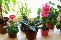 Вредные для человека комнатные растения
