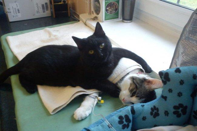 Добрый кот-медбрат