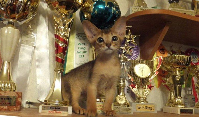 Выбрать питомник кошек не так легко