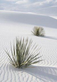 Пустыня Белых песков в Нью-Мексико