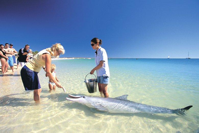 Пляж Monkey Mia: там, где дельфины приплывают смотреть на людей