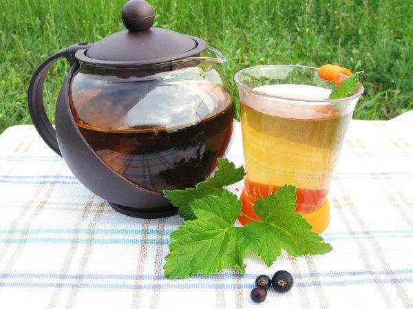 Польза чая из листьев смородины