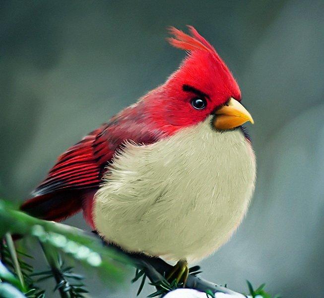 Angry Birds существуют?