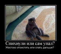 Смешной демотиватор с котом