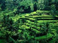 Рисовые террасы  Банануэ, Филиппины