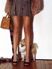 Если дамская собачка вышла из моды