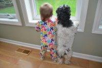 Ребенок и собака - первая встреча