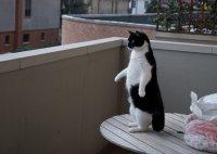 Ваш кот один дома?