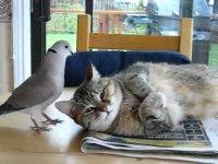 Будильник для кота