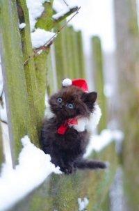 Здравствуйте, я ваша котя!