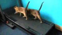 Подборка роликов с котами