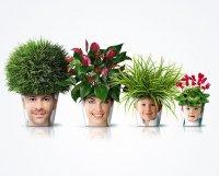Растения, которые очищают воздух
