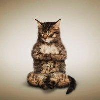 Йога-кошка