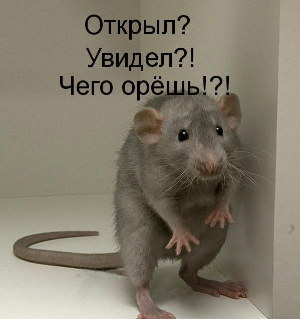 Прикольные картинки про крыс, сестре днем рождением