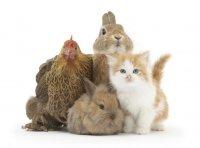 Фотографии маленьких животных от Марка Тэйлора