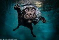 Животные под водой от Little Friends Photo