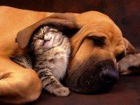 Кошки манипуляторы и ведомые собаки
