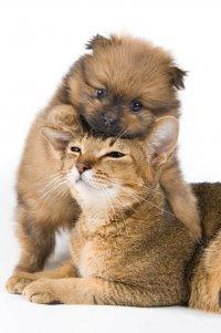 Адаптация кошки к появлению щенка
