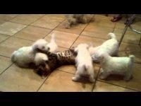А говорят кошки с собаками не дружат :)