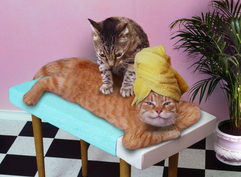 Массаж для кошки