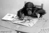 Шимпанзе Конго - художник из мира животных