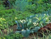 Как очистить садовый участок от клещей?