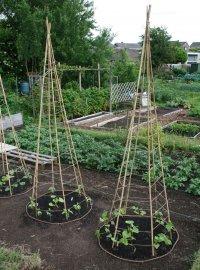 «Типи» для вьющихся огородных культур