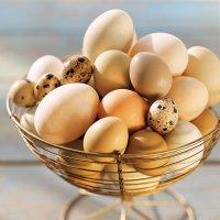 Яйца для здорового образа жизни