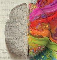 А ты какое полушарие мозга?